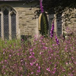 Philleigh Flowers