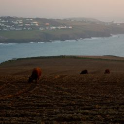 Polzeath Bay from Pentire Farm