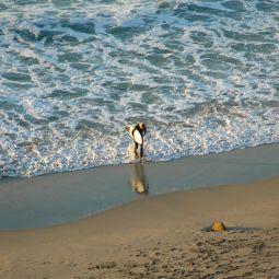 Solitary Surfer - Gwenver