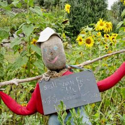 Scilly scarecrow