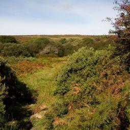 West Cornwall Scrubland