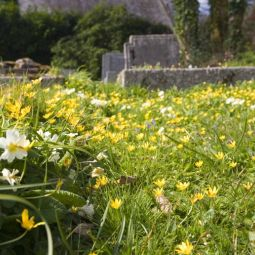 Spring Flowers - St Kea