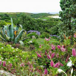 Garden on St Martin's - Scilly Isles