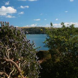 Glimpse of the River from St Mawes
