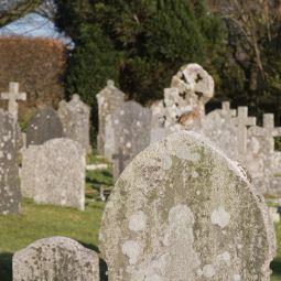 Robin - St Breward Graveyard
