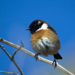 stone chat sites 18 reviews of stonechat perfect we were  view looking photo of stonechat -  killarney, co kerry  however, it saved room for dessert at the end of the meal.