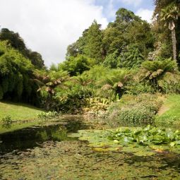 Trebah Gardens - Lilly Pond