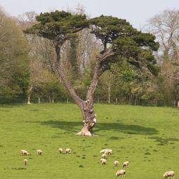 V Tree