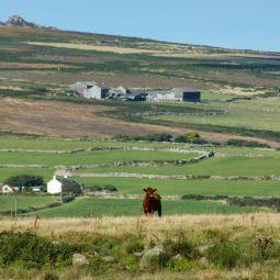 West Cornwall Farming