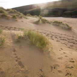 Winter Sand Dunes