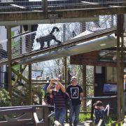 Monkey Sanctuary - Looe