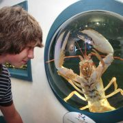 National Lobster Hatchery - Padstow