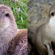 Tamar Otter Centre