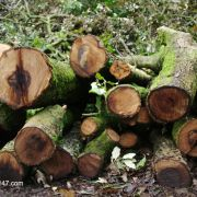 Logs, Tehidy Country Park