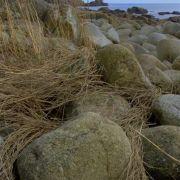 St Loys Cove Twixt Penberth and Lamorna