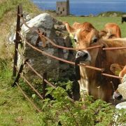 Cow and Gate and Mines...a pinta