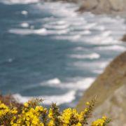 Porthtowan Coast Path