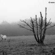 Nice tree & horse