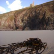 Wheal Coates, artistic focus