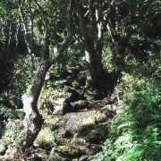 Lamorna woods and stream