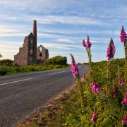Foxgloves and engine houses