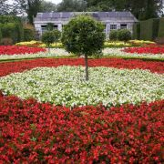 Mount Edgcumbe - French Garden