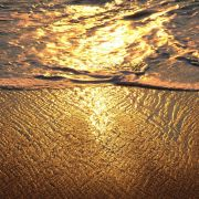 Golden Tide