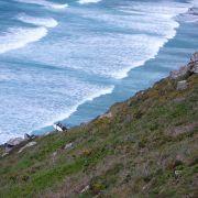 Post surf hike - Gwenver