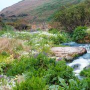 Kenidjack Valley in the Spring