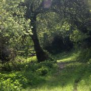 Woodland Path by Loe Pool