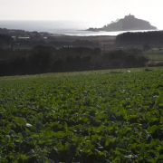 View Across the Cauli Fields