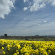 Mounts bay Daff frenzy