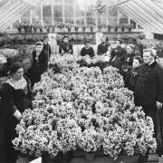 Scilly Flower Industry - 19th Century