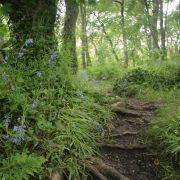 St Loy Woods