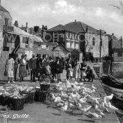 St Ives Seagulls