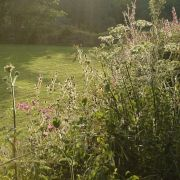 Summer's Evening Hedgerow
