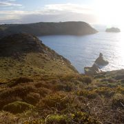 Evening Sun - Tintagel Coast