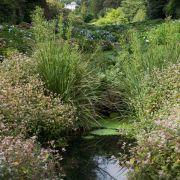 Trebah Gardens - Looking up