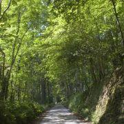 Woodland Road - Roseland