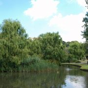 Willows in Trenance Gardens