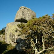 Trencrom Rock and Tree