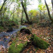 Trevaylor Woods Autumn