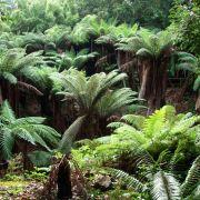 The Fern Pit - Trewidden Gardens