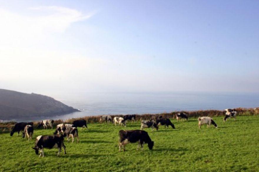Tremedda Farm