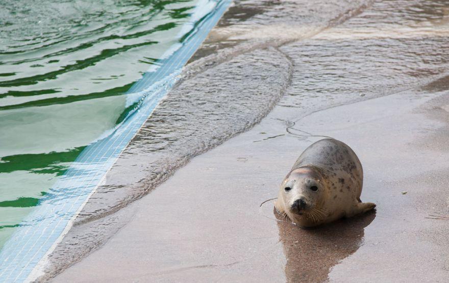 Injured seal - Seal Sanctuary