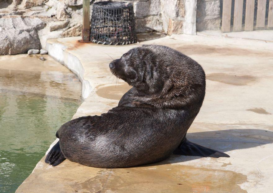 Seal Sanctuary sealion