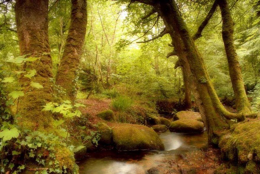 Trevaylor Woods