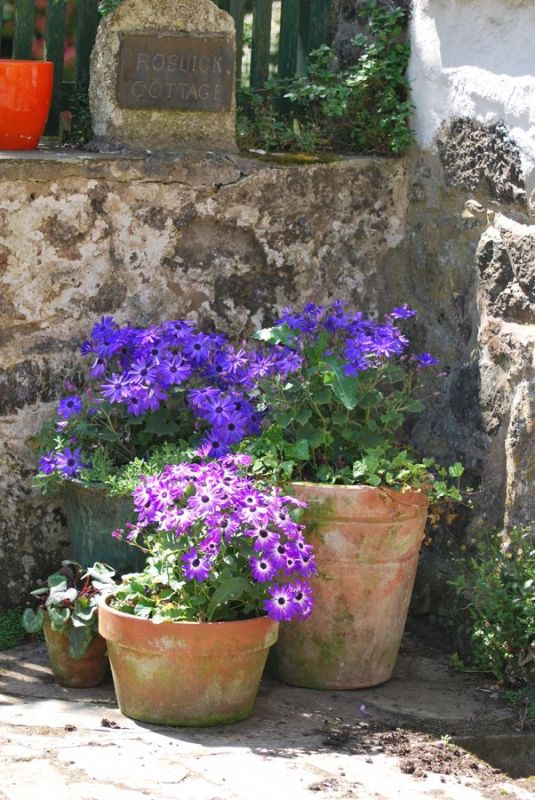Flowers at Rosuick Cottage
