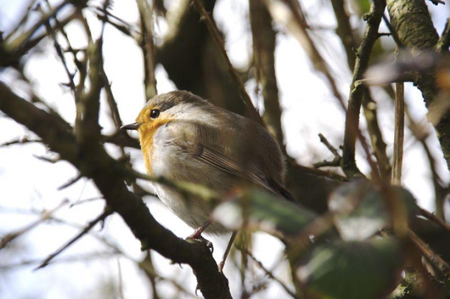 Robin, The Great Flat Lode