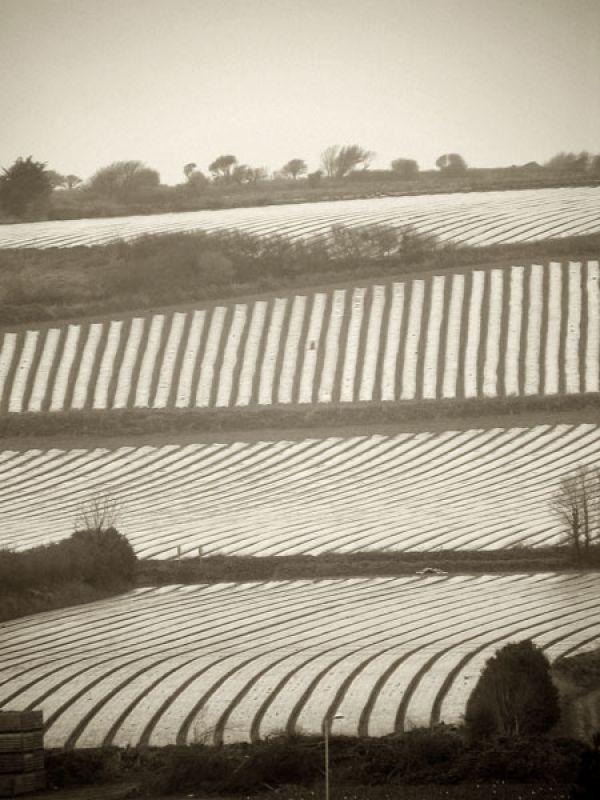 Farmland at Gulval